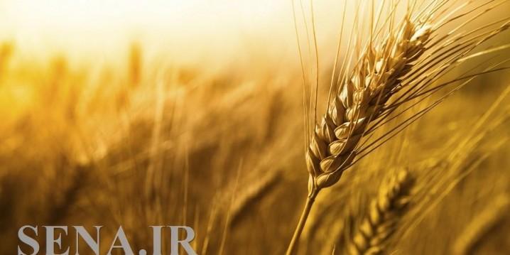جلوگیری از توزیع گندم بی کیفیت با بهره گیری از مکانیسم بورس