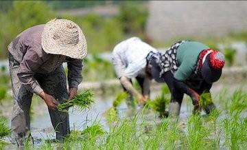 دادوستد ۵ محصول کشاورزی در تالار نقره ای
