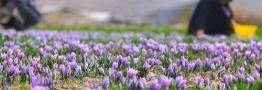 بورس کالا امید را در دل زعفرانکاران زنده کرد