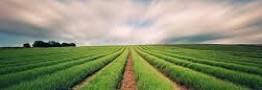 سال 95، سال دگردیسی بخش کشاورزی بورس کالا