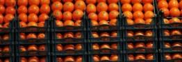تشدید مقابله با ورودغیرقانونی میوه/ روزانه 300 تن نارنگی قاچاق توزیع می شود